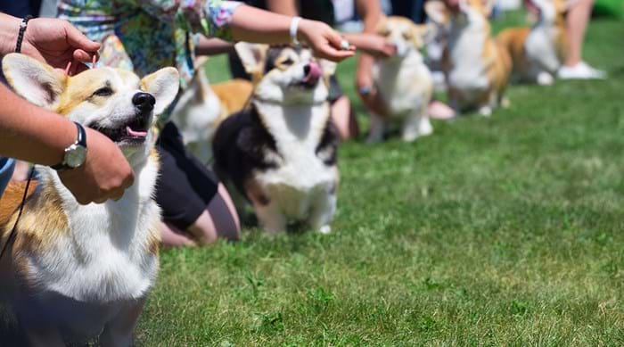 The International Dog Show in Luxembourg sees a variety of breeds come together in competition.